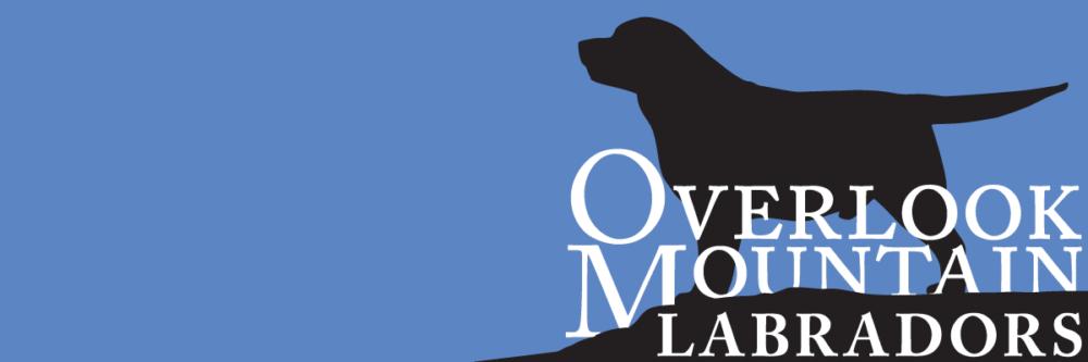 Overlook Mountain Labradors